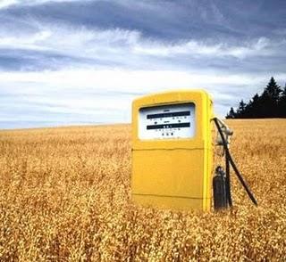 Biobränsle kan vara problematiskt om odlingsmark som behövs för matproduktion istället används för bränsleproduktion. Bild: Biofuels Wiki