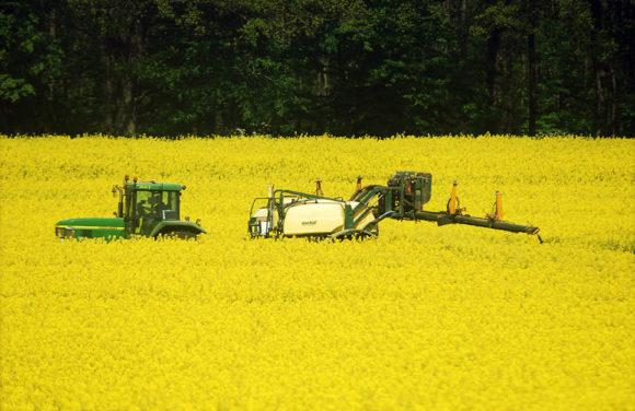 Biobränsle exemplifierat med ett skånskt rapsfält. Bild: Henry von Platen, CC BY-SA 3.0