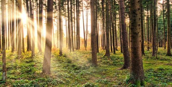 Skog kan vara en kolsänka. Bild: Landsbygdsnätverket