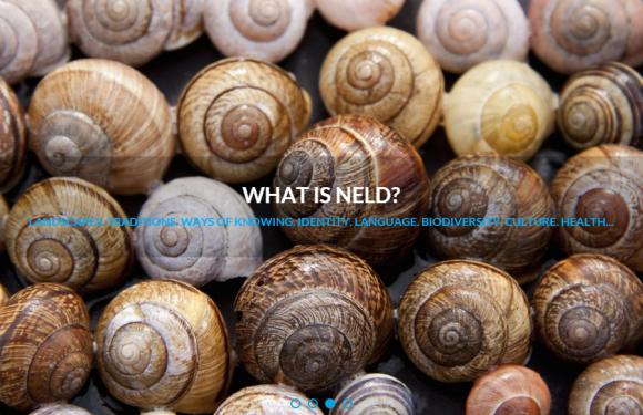 Icke-monetära förluster och skador, på engelska Non-Economic Loss and Damage, NELD. Bild: NELD Platform