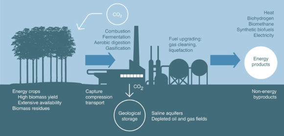 Processen i ett biokraftverk med BECCS. Bild: Nature